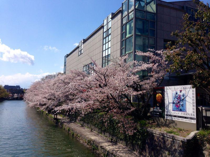 桜とギャラリー巡り_c0100195_1024574.jpg