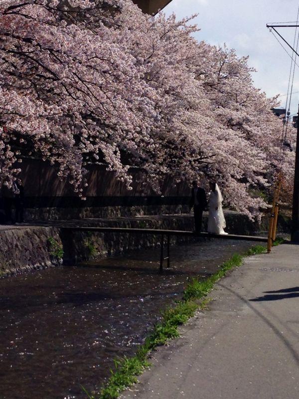 桜とギャラリー巡り_c0100195_1024642.jpg