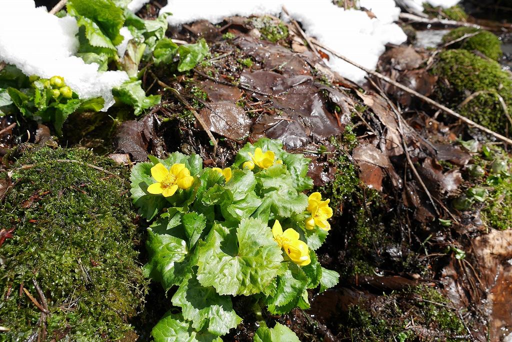 4月7日、札幌岳-速報版-_f0138096_2282994.jpg