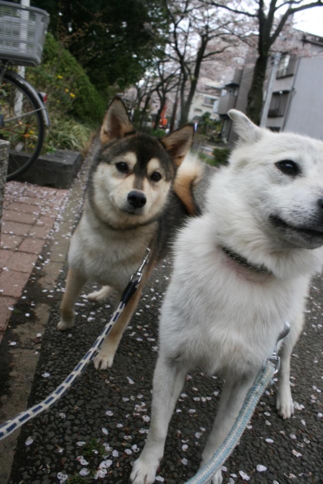 かるびちゃん&はらみちゃん_f0242002_20123468.jpg