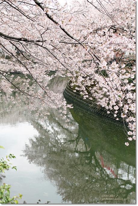 大岡川 桜散歩♪ と タカノフルーツパーラー_f0179404_21414964.jpg