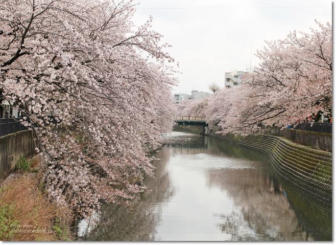 大岡川 桜散歩♪ と タカノフルーツパーラー_f0179404_21423113.jpg