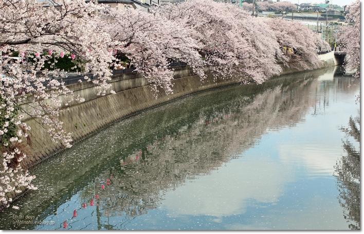 大岡川 桜散歩♪ と タカノフルーツパーラー_f0179404_21433214.jpg
