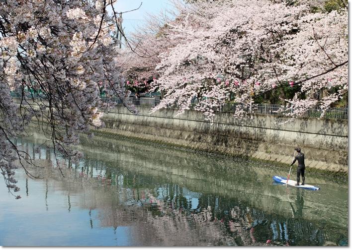 大岡川 桜散歩♪ と タカノフルーツパーラー_f0179404_21442850.jpg