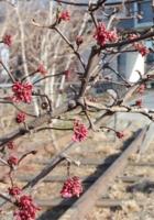 早春のニューヨーク、空中公園ハイラインの様子_b0007805_027627.jpg