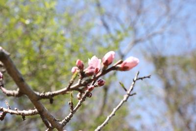 春らしく_e0179508_14365638.jpg