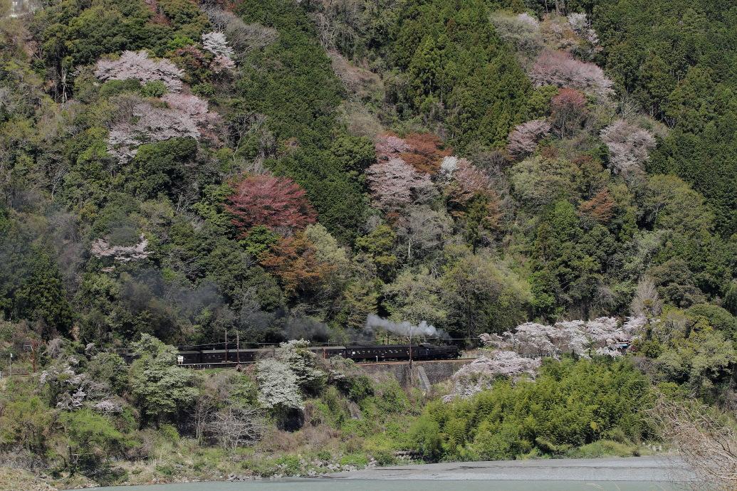 桜だけの駅 - 2014年桜・大井川 -  _b0190710_2227384.jpg