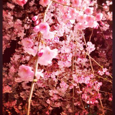 桜前線_c0227612_1649110.jpg