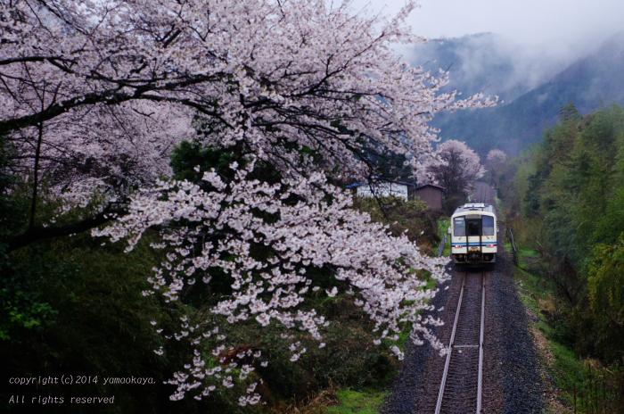 桜の路を..._d0309612_21555258.jpg