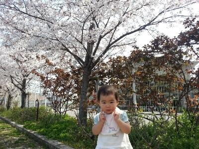 桜_e0136815_16201546.jpg