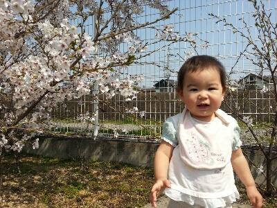 桜_e0136815_1620598.jpg