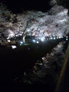 春が来た春が来た 金沢に_a0142317_1021158.jpg