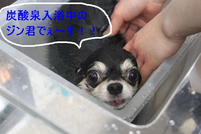 洗車の後は。。。_b0130018_19101187.jpg