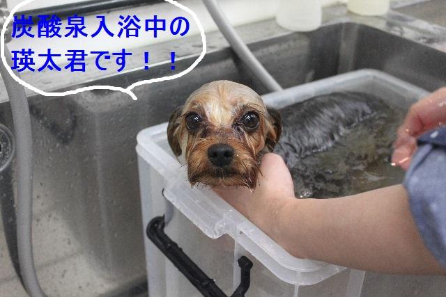 洗車の後は。。。_b0130018_19142593.jpg