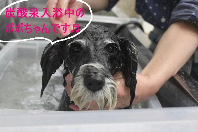 洗車の後は。。。_b0130018_19164099.jpg