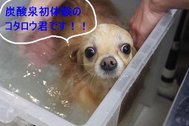洗車の後は。。。_b0130018_19182213.jpg
