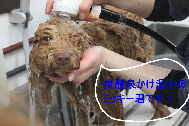洗車の後は。。。_b0130018_1921237.jpg