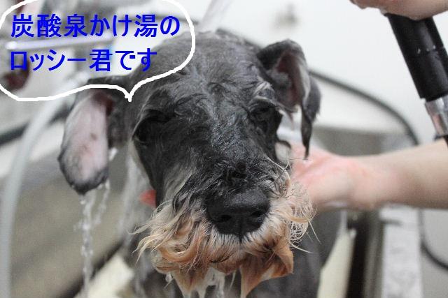 洗車の後は。。。_b0130018_1928376.jpg