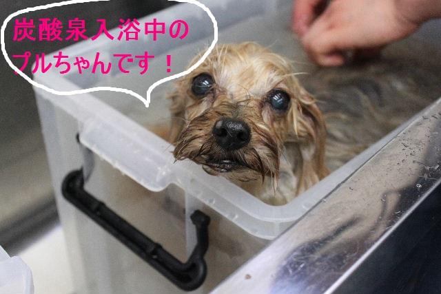 洗車の後は。。。_b0130018_19304032.jpg