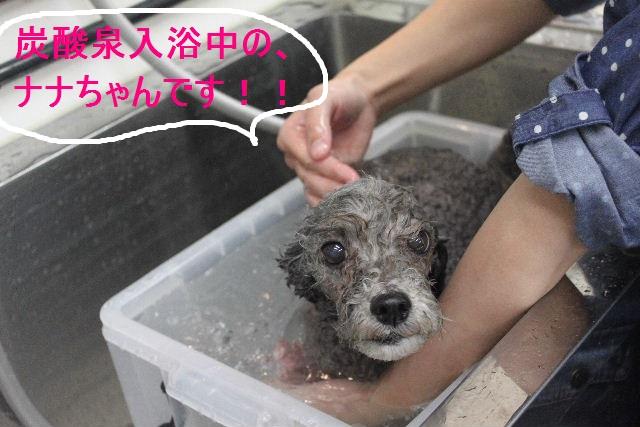 洗車の後は。。。_b0130018_1933545.jpg