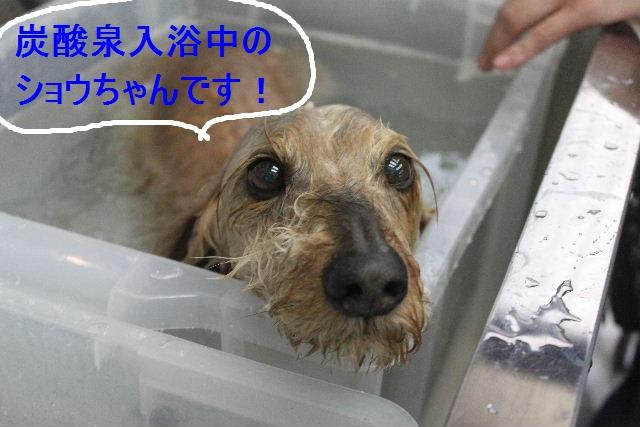 洗車の後は。。。_b0130018_194271.jpg