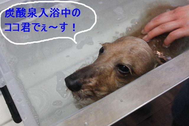 洗車の後は。。。_b0130018_1942973.jpg