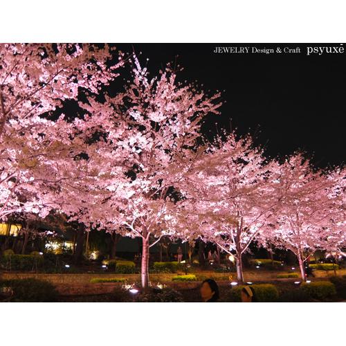 夜桜散歩_e0131432_15431181.jpg