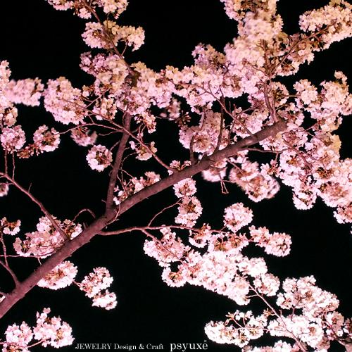 夜桜散歩_e0131432_1543233.jpg
