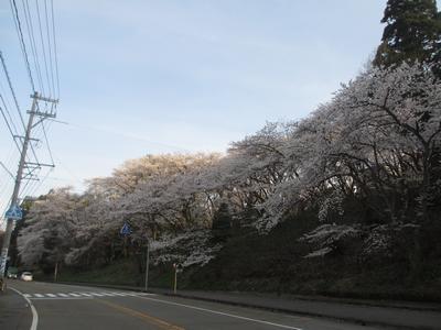 桜の季節_f0289632_1244169.jpg