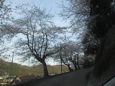 桜の季節_f0289632_1245625.jpg