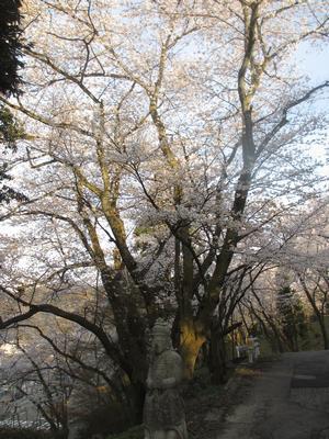 桜の季節_f0289632_126392.jpg