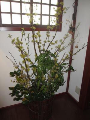 桜の季節_f0289632_1472888.jpg