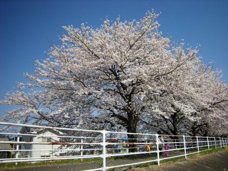 麦畑を突っ走り春本番の高崎へ!_b0206037_18152224.jpg