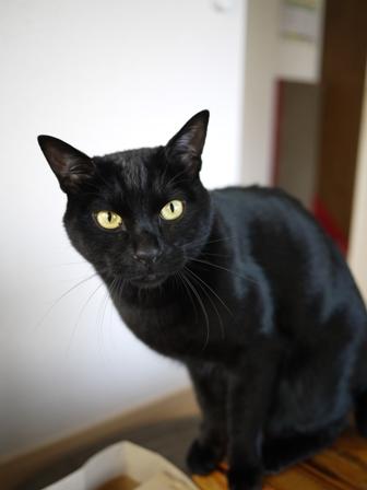 猫のお友だち ミーャくん編。_a0143140_22564877.jpg