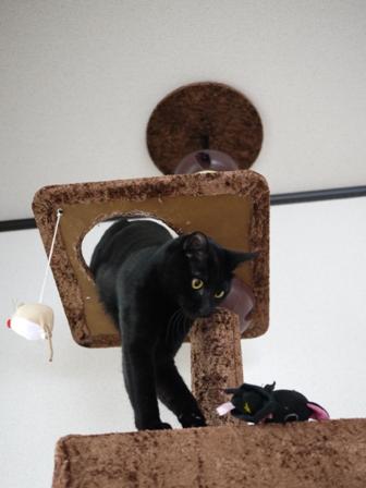 猫のお友だち ミーャくん編。_a0143140_2301248.jpg