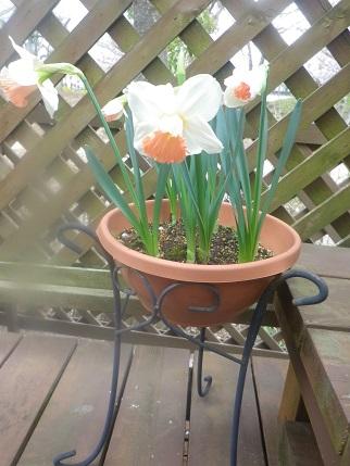 庭の状況2_a0139242_530288.jpg