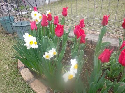 庭の状況2_a0139242_532199.jpg