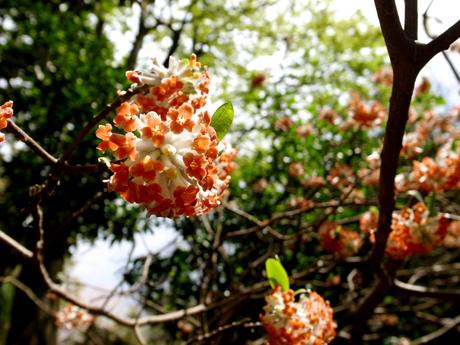 時には花咲く道をゆく_e0071652_6293759.jpg