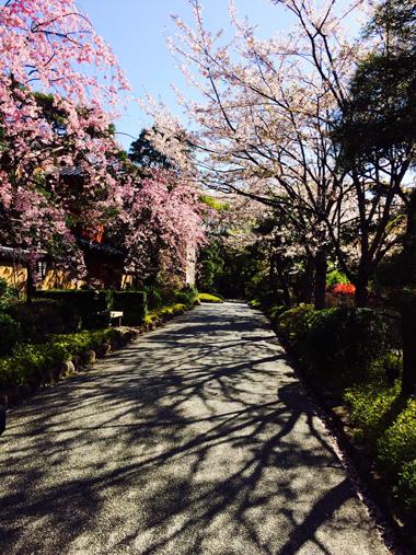 時には花咲く道をゆく_e0071652_6304180.jpg