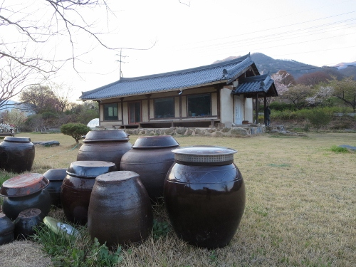 韓国料理と桜_b0100062_2217342.jpg