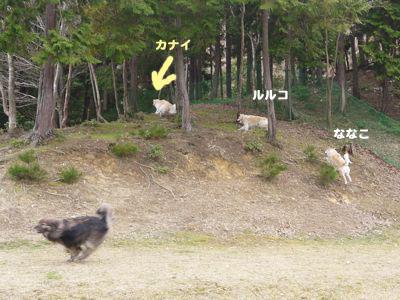 カナイくんを探せ!〜白犬クイズ <答え>_a0119263_18102064.jpg