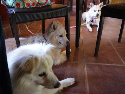 カナイくんを探せ!〜白犬クイズ <答え>_a0119263_1812172.jpg
