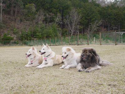 カナイくんを探せ!〜白犬クイズ <答え>_a0119263_18135350.jpg