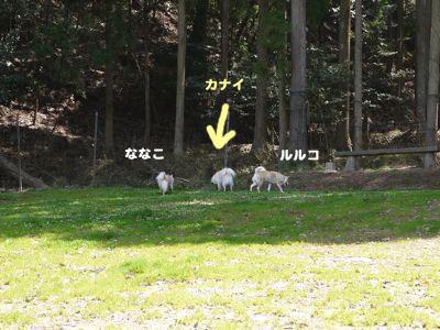 カナイくんを探せ!〜白犬クイズ <答え>_a0119263_182596.jpg