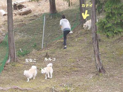 カナイくんを探せ!〜白犬クイズ <答え>_a0119263_1842940.jpg