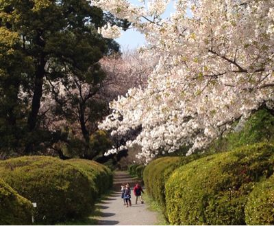 小石川植物園_d0064366_1743109.jpg