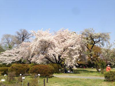 小石川植物園_d0064366_1743919.jpg