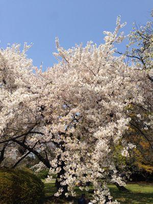 小石川植物園_d0064366_1743958.jpg
