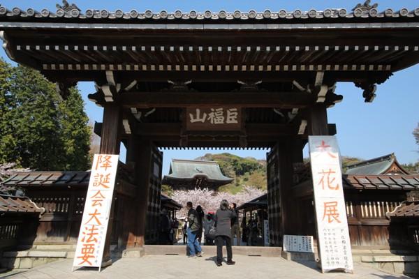 建長寺の桜_c0310571_21490239.jpg