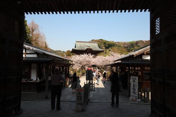 建長寺の桜_c0310571_21510430.jpg